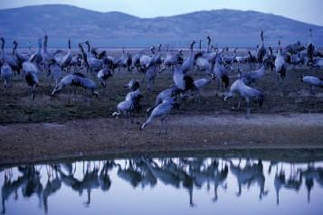 un paseo por la laguna de Gallocanta en Zaragoza